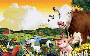 Krava,  ki bo postala zrezek