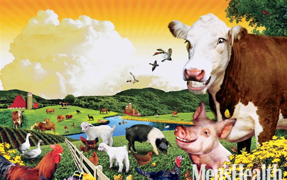 Krava,  ki bo postala zrezek (foto: Eddie Guy)