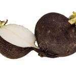 Črna redkev povečuje telesno odpornost.  (foto: Shutterstock.com)