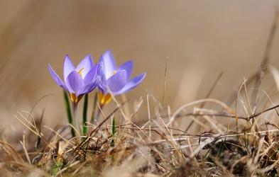 Pomlad prihaja, sonce se že smehlja