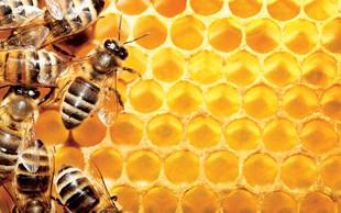 S čebeljim pikom nad multiplo sklerozo