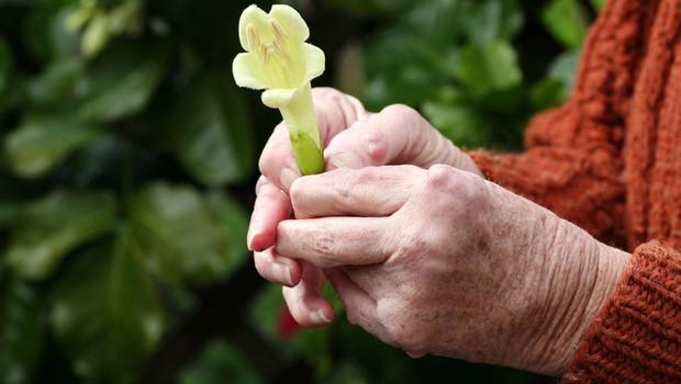 Revmatitis: Odločilno je zgodnje zdravljenje! (foto: Shutterstock.com)
