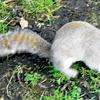 V parkih mrgoli malih živalic – od prelepih rac do veveričk, ki komunicirajo in ti sporočijo zadnje dnevne novice.
