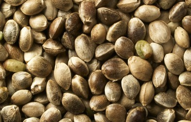 Konopljina semena – polna vitaminov in omega 3