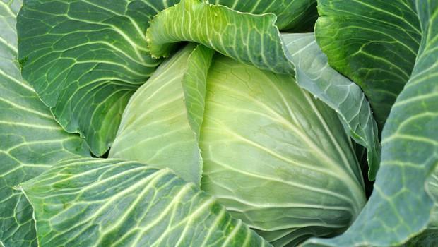 Sveže zelje - zaščitnik pred vrsto bolezni (foto: Shutterstock.com)