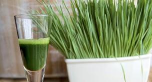 Izjemne lastnosti soka pšenične trave