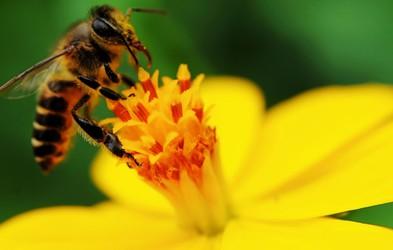 Kako ravnati ob piku žuželke