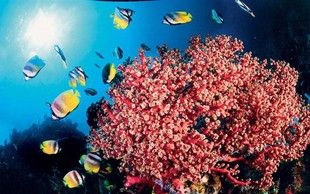 Najlepši kraji za potapljanje: Lembeh, Indonezija