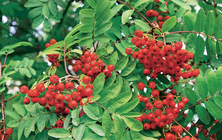 Moč divjih plodov
