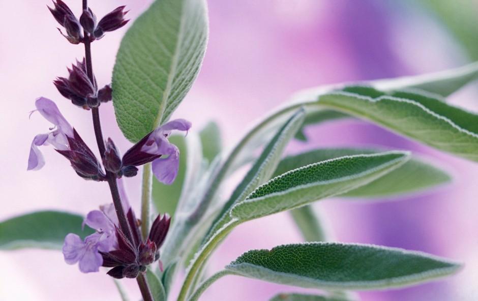 24 zdravilnih zelišč in njihovo posebno učinkovanje (foto: Profimedia)