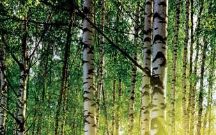 Gozdni sadeži in njihovi prebivalci – balzam za naše telo in dušo