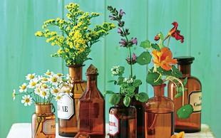 Moč rastlin namesto antibiotikov