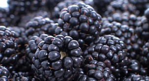 Rastlinski viri omega-3 maščobnih kislin