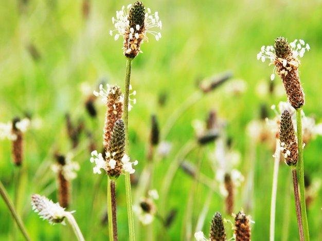 Katere rastline so povzročiteljice alergij? - Foto: Profimedia, Shutterstock, Shutterstock.com