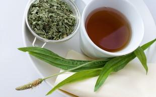 Ozkolistni trpotec – zdravilna zel, ki blaži dražeč kašelj in zdravi rane