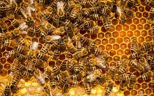 Zdravilni učinki medu, propolisa in ostalih čebeljih izdelkov