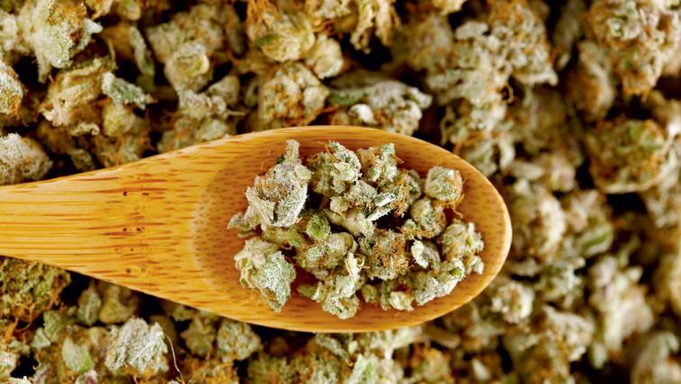 THC boste lahko dobili na samoplačniški recept (foto: profimedia)