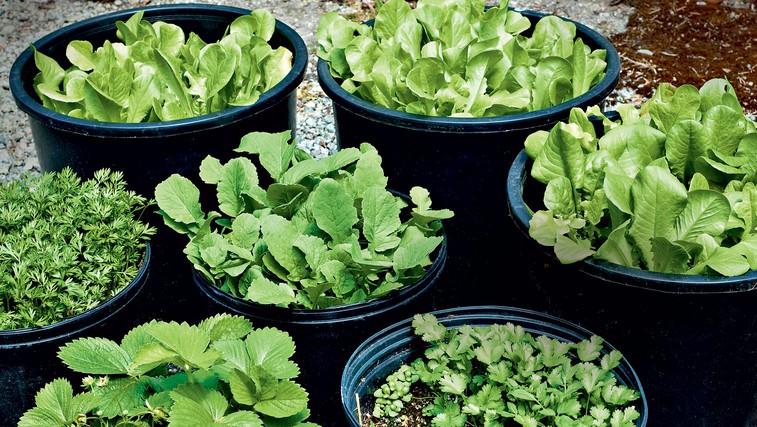 Sveža zelišča so nenadomestljiva, zato jih uporabite kmalu po trganju. Do uporabe jih imate lahko v vodi kot rožice. (foto: Revija Čarovnija okusa)