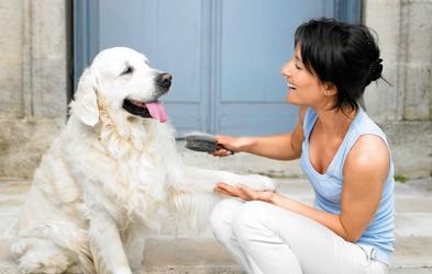 Zakaj imamo tako radi pse?