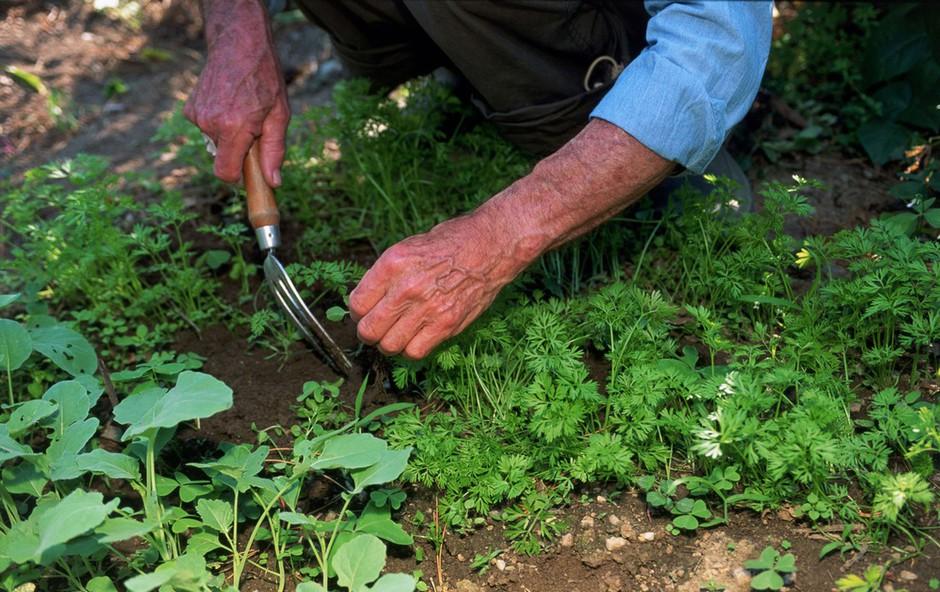 Kuhajte z okusnimi in aromatičnimi divjimi zelišči (foto: profimedia, stockfood photo)