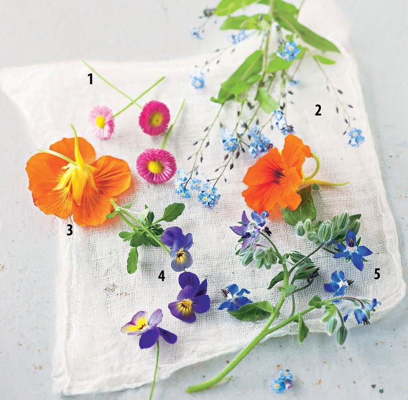 cvetlice za pojest