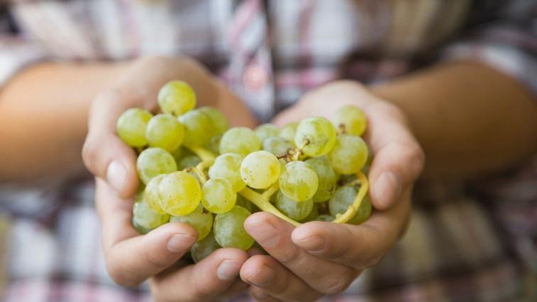 Spoznajte zdravilne lastnosti grozdja (foto: Profimedia)