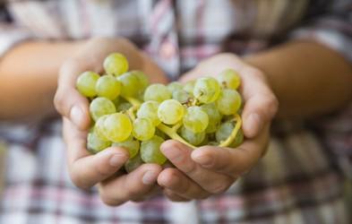 Spoznajte zdravilne lastnosti grozdja