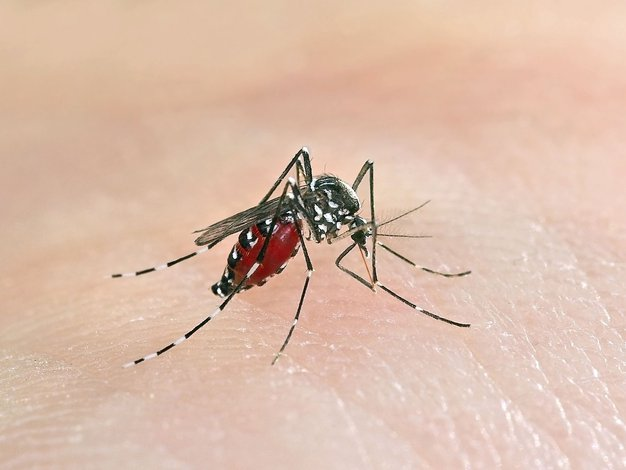 Koga komarji najraje pičijo? - Foto: Profimedia