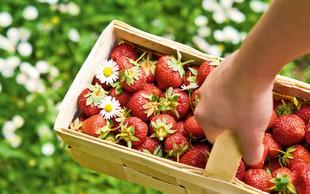 Nova jagodna dieta: S sladkanjem do vitkosti!