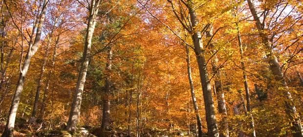 kocevje-gozd