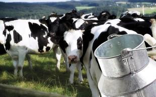 Mleko - da ali ne?