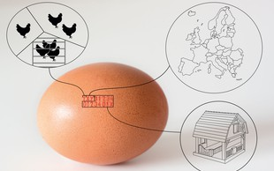 Katera jajca pa vi kupujete?