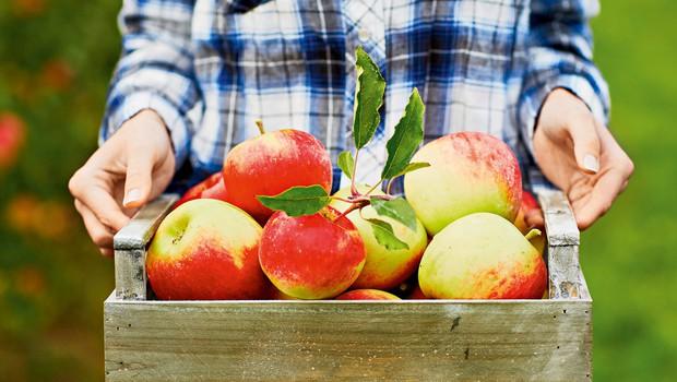 Jabolčna turbo dieta (foto: Shutterstock)