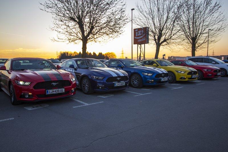 karavana Fordovih Mustangov