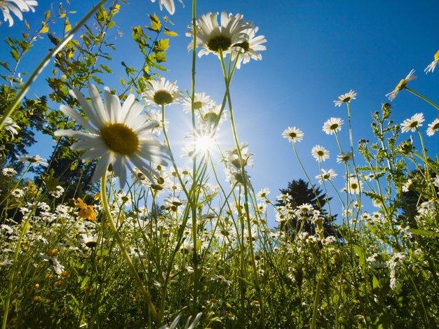 Previdno tudi na pomladnem soncu - Foto: Profimedia