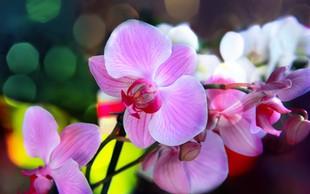 Kako negovati sobne rastline