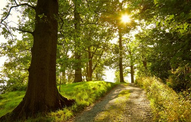 Svetloba daje radost življenju