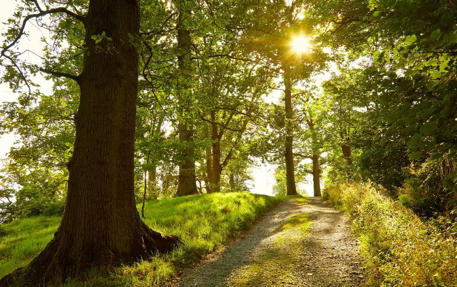 Svetloba daje radost življenju (foto: Profimedia)