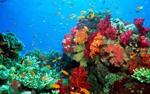 7 najlepših koralnih grebenov