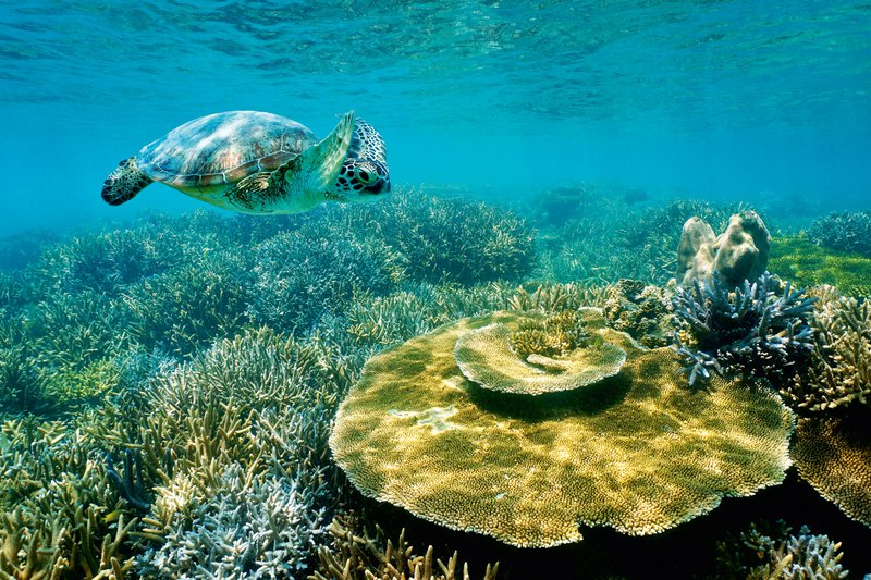Lagune Nove Kaledonije, Južni Pacifik