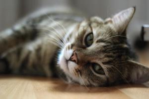 Kaj nas o vztrajnosti in življenju nasploh lahko naučijo mačke?