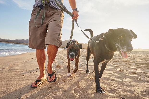 Sprehodite psa Čeprav je misel, da boste preostanek dneva preživeli na kavču, saj vas mučijo krči od včerajšnje vadbe, precej ...