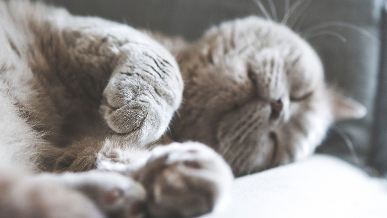 Dovolite vaši mački spati z vami v postelji? Poglejte, kakšne posledice ima lahko to za vas in vašega ljubljenčka! (foto: Kasya Shahovskaya | Unsplash)
