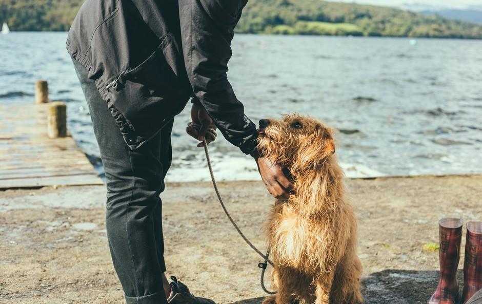 Koga psi bolj ubogajo, moške ali ženske? Raziskava je pokazala, da ... (foto: Unsplash/Joseph Pearson)