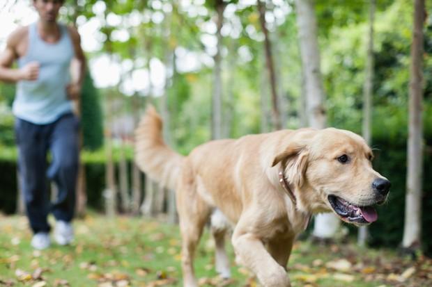 Boljša fizična pripravljenost Lastniki psov morajo kondicijo vsaj delno ohraniti tudi pozimi, ko veliko ljudi preneha z vadbo zaradi hladnega …