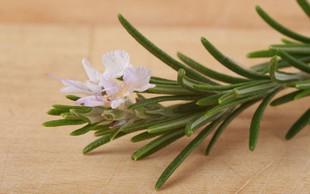 7 skrivnih zdravilnih značilnosti rožmarina