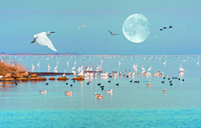Najlepša mokrišča v Sredozemlju