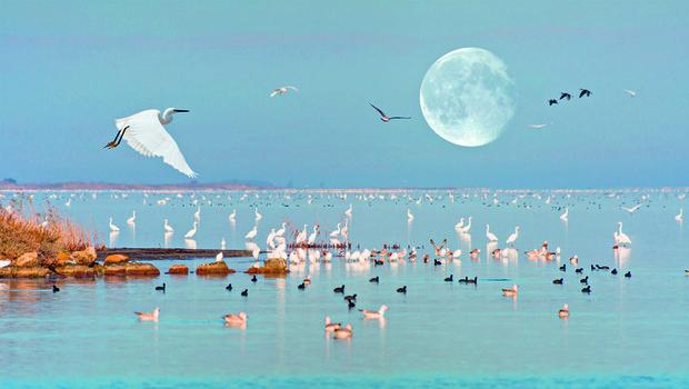Najlepša mokrišča v Sredozemlju (foto: shutterstock)