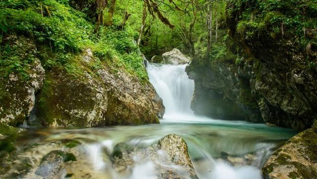 Ideja za izlet: Šunikov vodni gaj (foto: Jože Flajs)