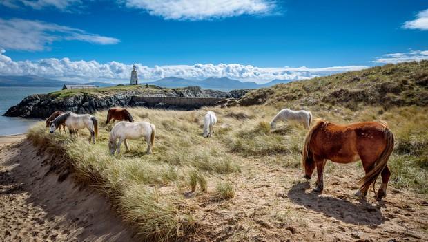 FOTO: Anglesey - valižanski biser, ki ponuja veliko lepega in zanimivega (foto: Shutterstock)